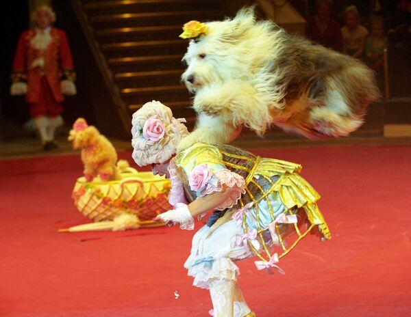 Дрессированые собаки в Цирке Никулина. Архив