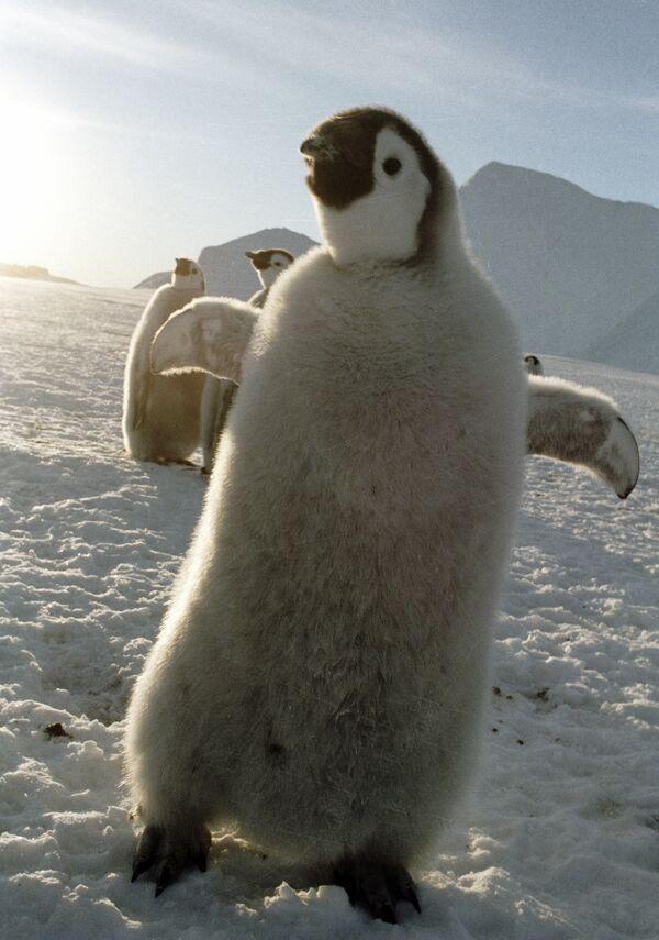 Пингвины. Архив