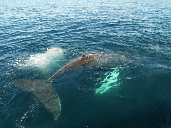 Млекопитающее, которое... поет. Интересные факты о китах