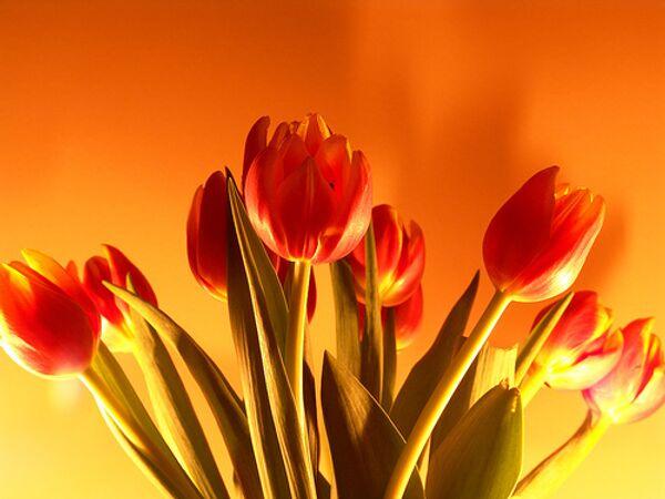 Тюльпаны. Архив