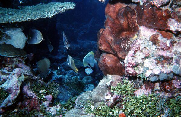 В море кораллового рифа