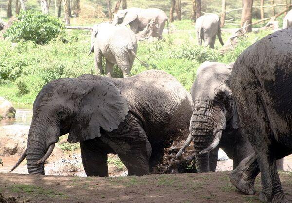 Слоны. Архив