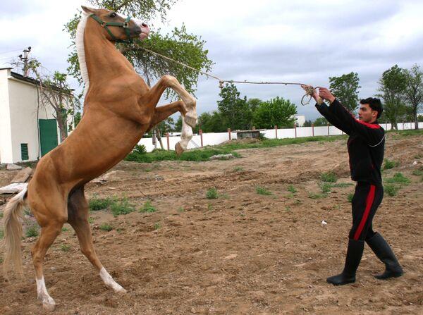 Ахалтекинские кони