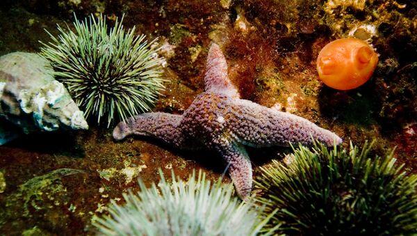 Морская звезда и морские ежи