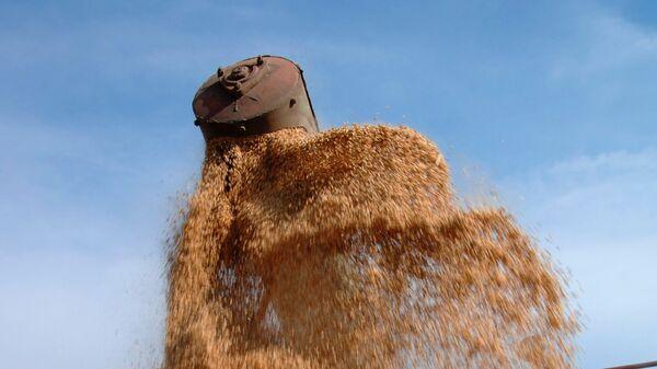 Уборка урожая зерна. Архив