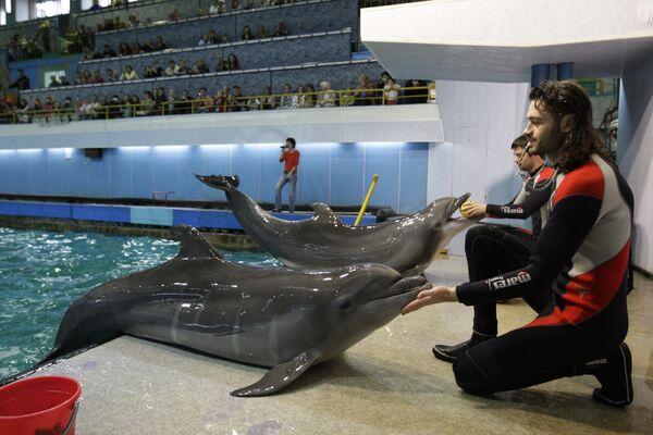 Московский (Утришский) дельфинарий