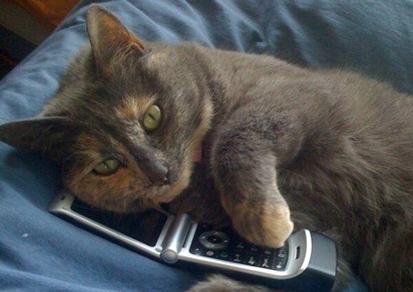 Кошка, телефон