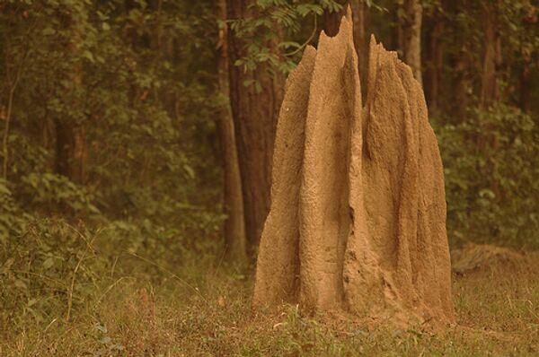 Термитов можно отпугнуть звуком, имитирующим жевание боевых муравьев