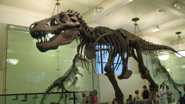 Скелет тираннозавра. Архив