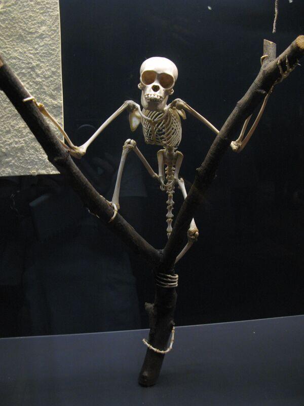 Останки древнейшего млекопитающего в Американском музее естествознания