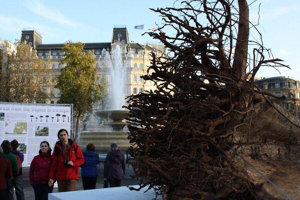 Лес-призрак на Трафальгарской площади напомнит об опасности сведения лесов в Африке
