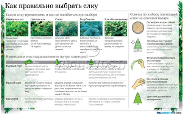 Как правильно выбрать елку