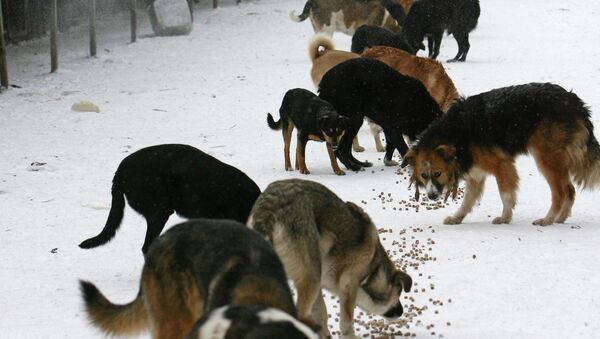 Приют для собак. Архив