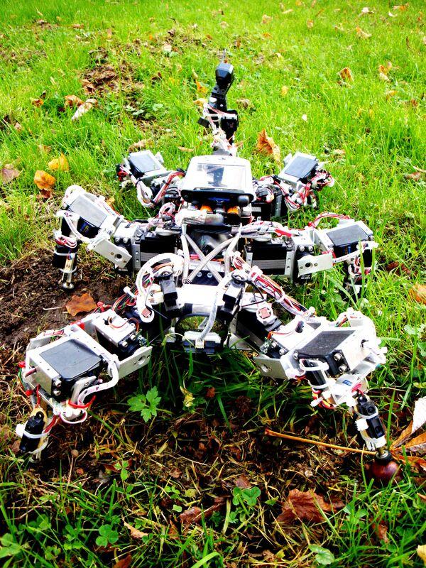 Ученые создали шестиногого шагающего робота, способного самостоятельно