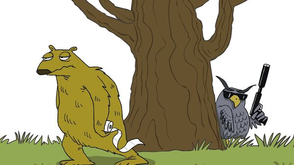 Сова в Панаме убила ленивца, спустившегося с дерева в туалет
