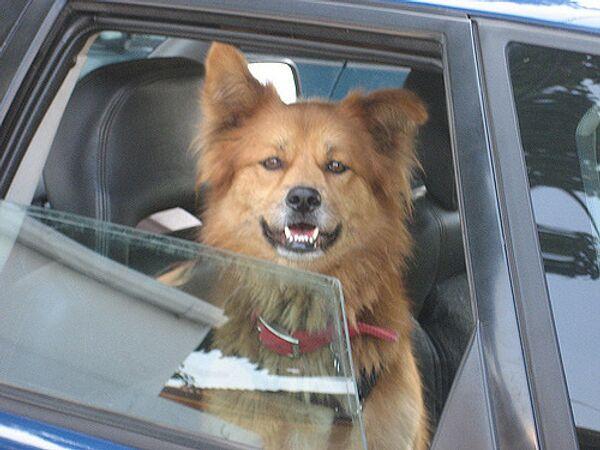 Прививки от бешенства проверят у домашних животных на выезде из Москвы. Архив