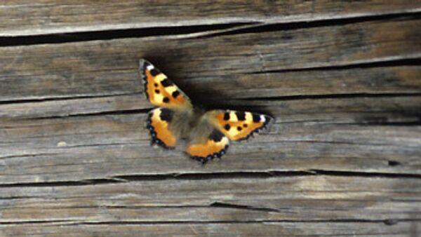 Кормушки для бабочек появятся в Кузьминском парке Москвы