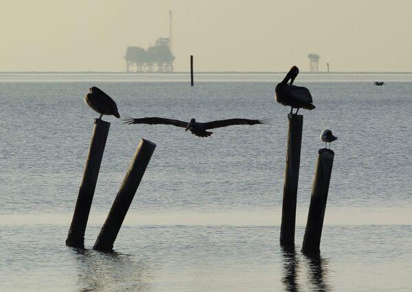 Пеликаны в Алабаме. Архив