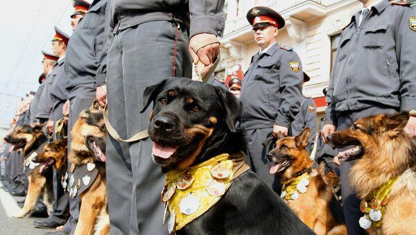 Кинологи со служебными собаками. Архив