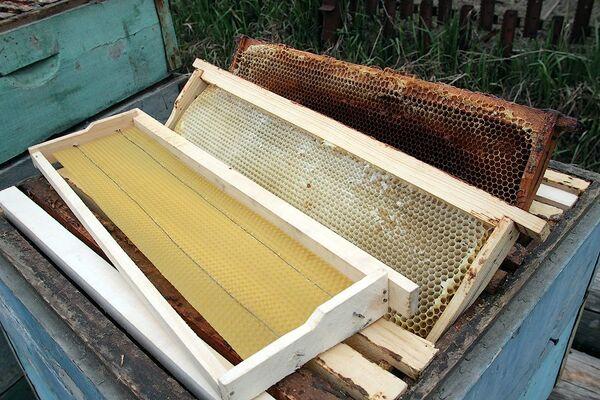 Неудачливый французский пасечник украл у коллег 150 пчелиных ульев