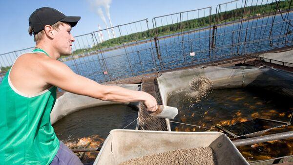Разведение рыбы на ГУПСО Рефтинский рыбхоз