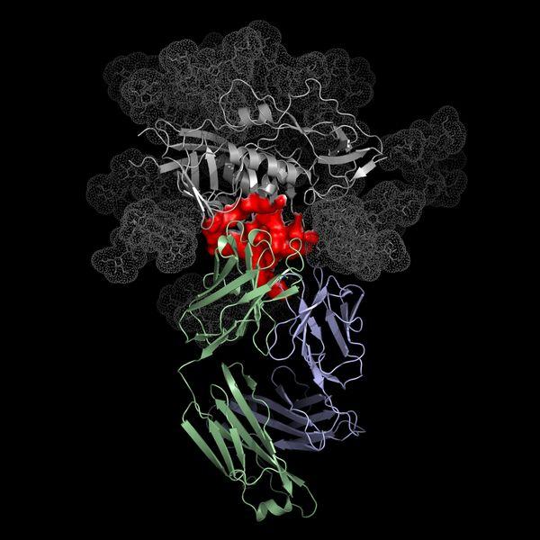 Антитело человека, способное нейтрализовывать более 90% разновидностей вируса СПИДа