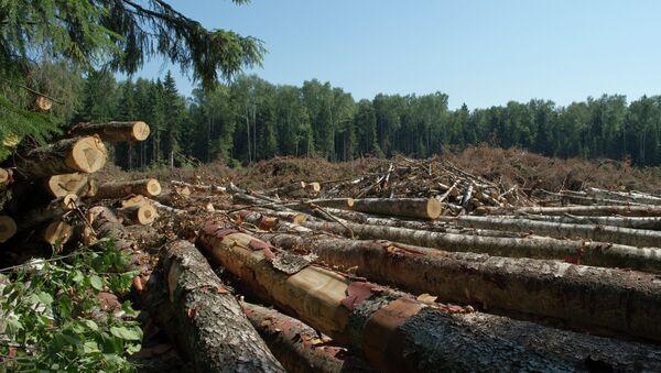 Вырубка леса. Архив
