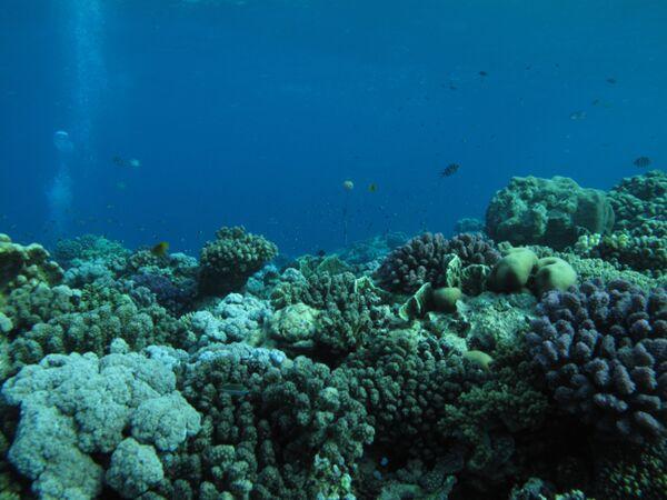 Коралловые рифы в центральной части Красного моря