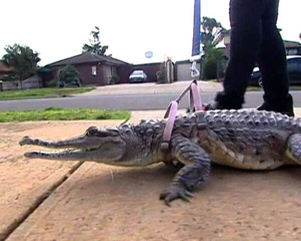 Австралийка променяла мужа на крокодила Джонни