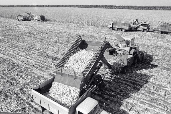 Механизированная уборка кукурузы