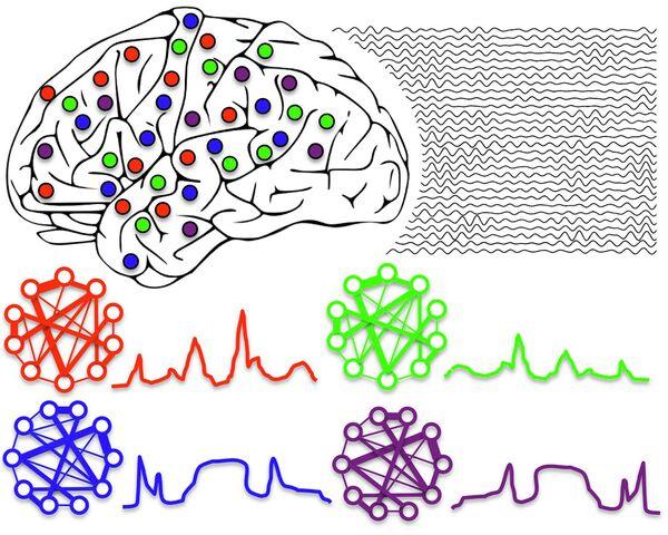 Ритмы головного мозга организуют работу распределеных в нем нейронов