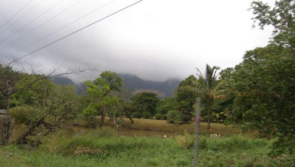 Леса в Панаме, архивное фото