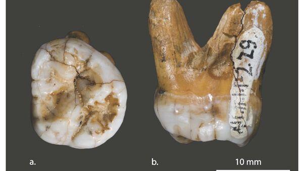 Гены ранее неизвестного вымершего вида людей нашлись у меланезийцев