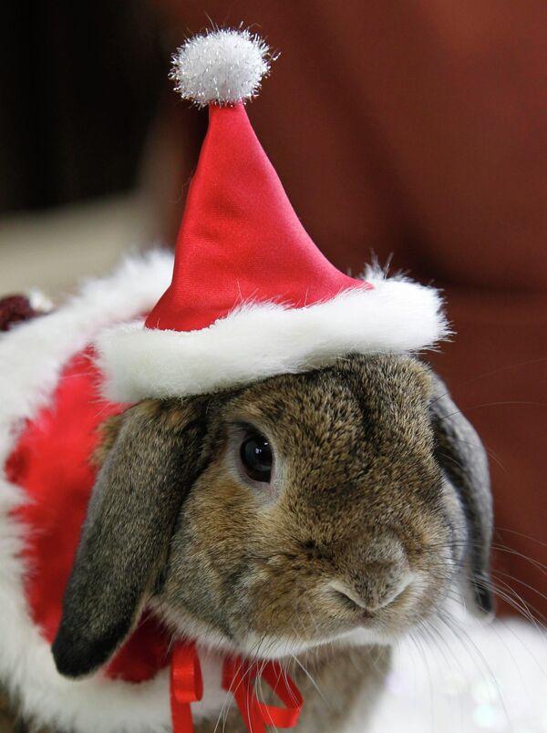 Приветствие смешные, картинки года кролика
