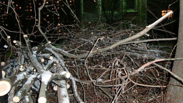 В Москве спилили сотни деревьев, поврежденные после ледяного дождя.