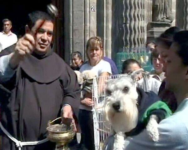 Мексиканцы молятся за домашних животных и окропляют их святой водой