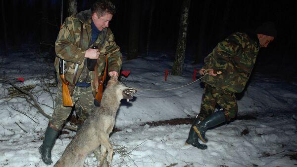 Охота на волков, архивное фото