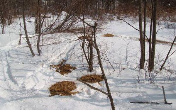 Помощь охотничьим хозяйствам в период неблагоприятных погодных условий в Приморском крае