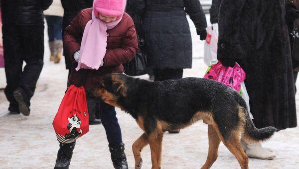 Бездомные собаки на улицах