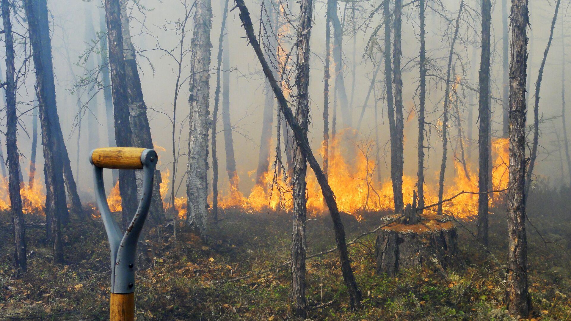 Минприроды заявило о сильном занижении двумя регионами данных по пожарам