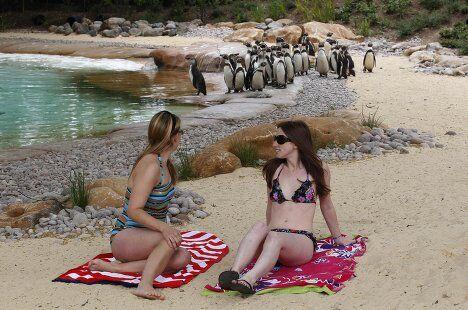 Пингвины в зоопарке Лондона