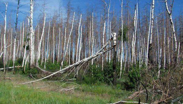 Последствия лесных пожаров в Воронеже