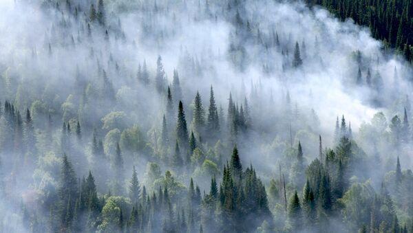Лесные пожары в Красноярском крае