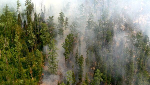 Лесные пожары в Красноярском крае. Архив