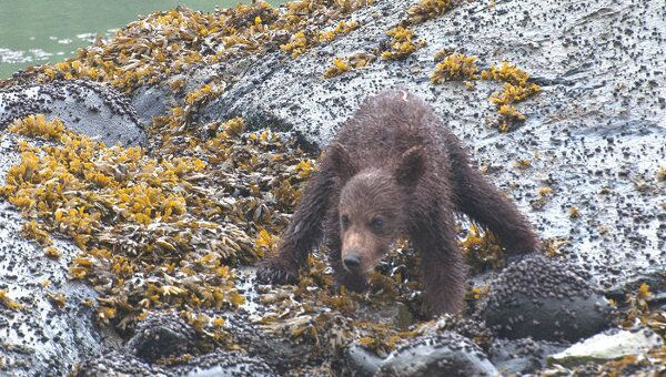 Медведь, архивное фото