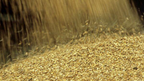 Урожай зерна. Архив