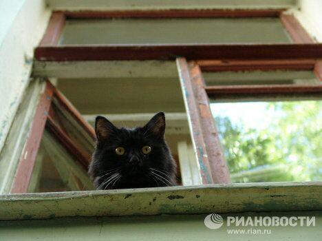 Черный кот- житель Булгаковского дома
