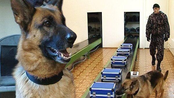 Лучший инструмент поиска наркотиков – нос собаки