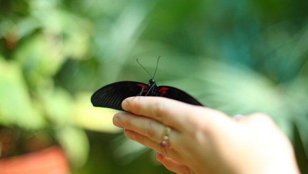 Бабочка на ладони, или Путешествие на экзотическую выставку в Москве