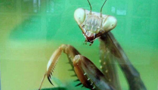 Гигантские насекомые на выставке в биологическом музее им. Тимирязева